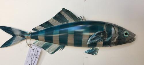 New Zealand Pilot Fish