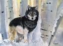 Lone Wolf (thumbnail)