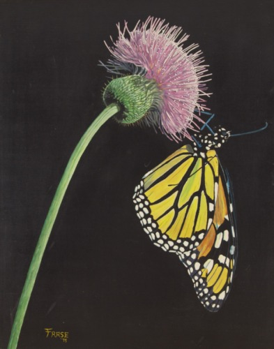 MONARCH AND THISTLE (large view)