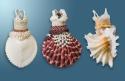 Three Separate Shell Dress Pins (thumbnail)