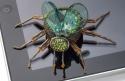 Computer Bug (thumbnail)
