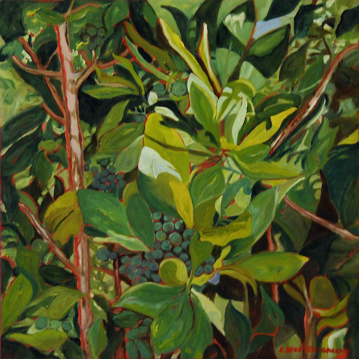 Desert Olive (large view)