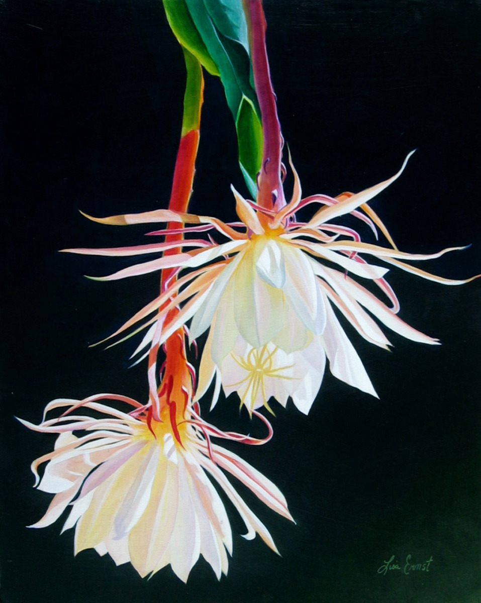 Night Blooming Cereus (large view)