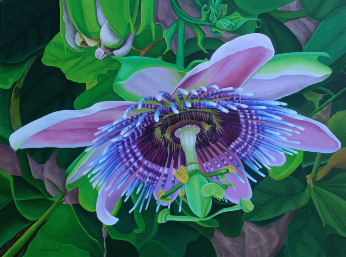 Passion Flower (large view)