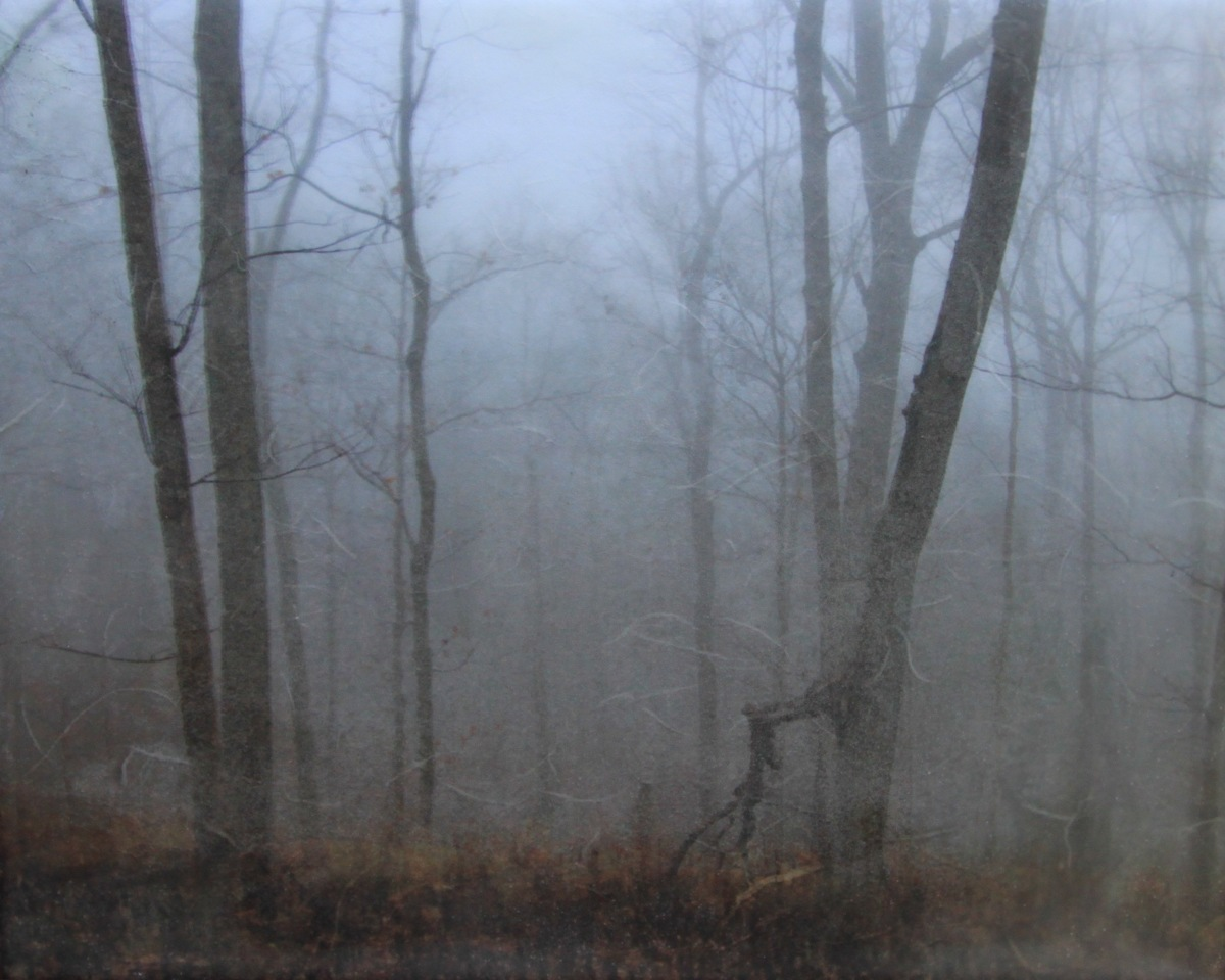 Late Fall Mist at Radnor Lake (large view)