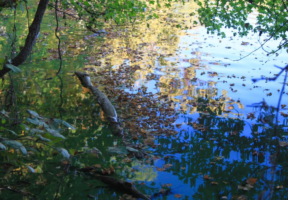 Abstract Fall at Radnor Lake (large view)