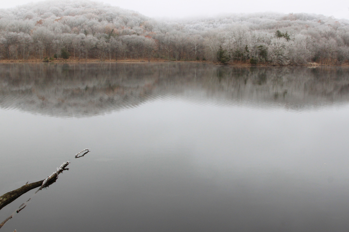 Frosty, Foggy Morning  (large view)