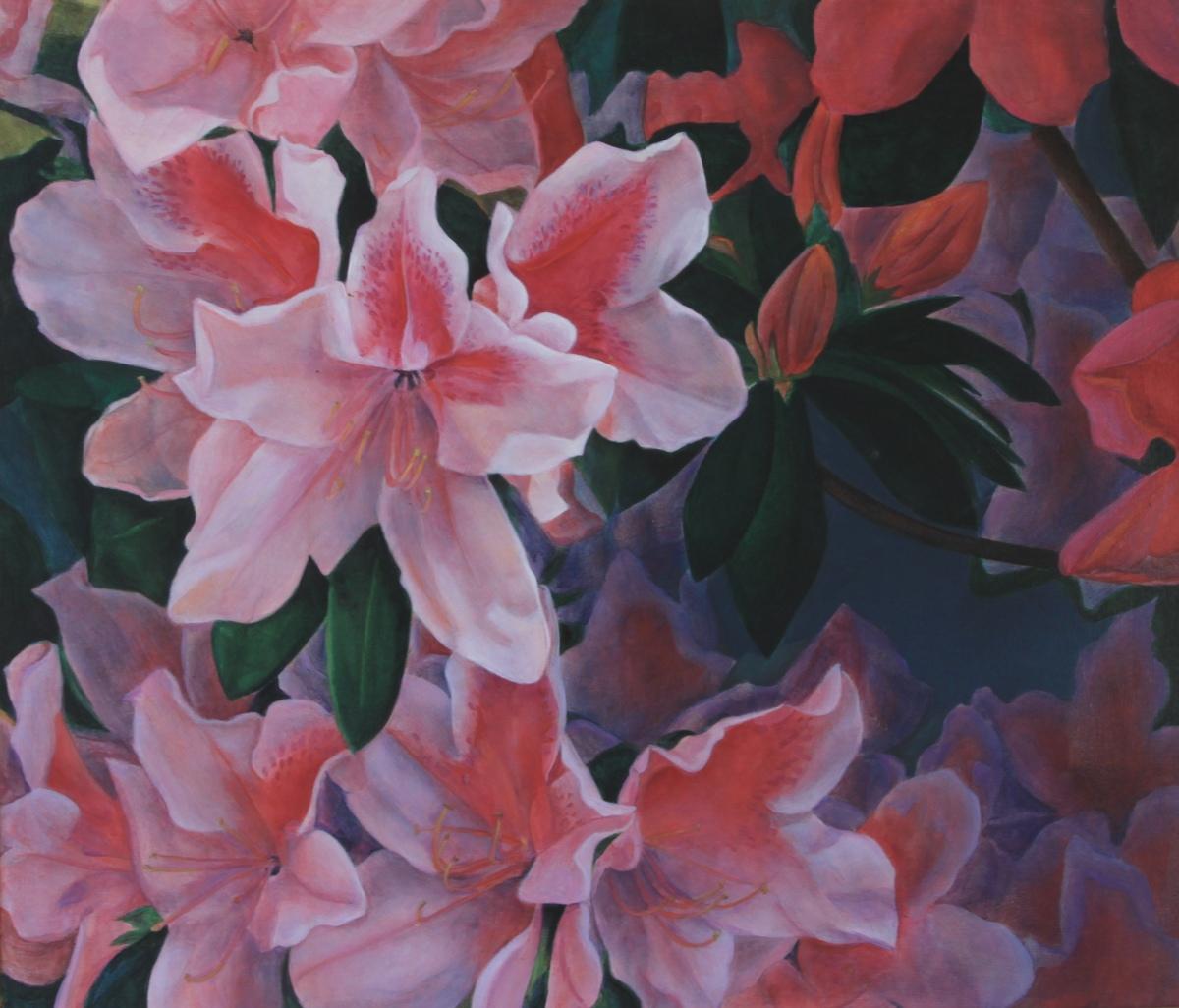 Pink Azalea (large view)
