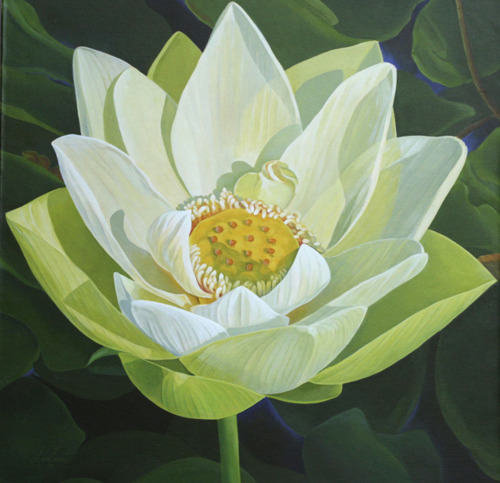 White Lotus (large view)