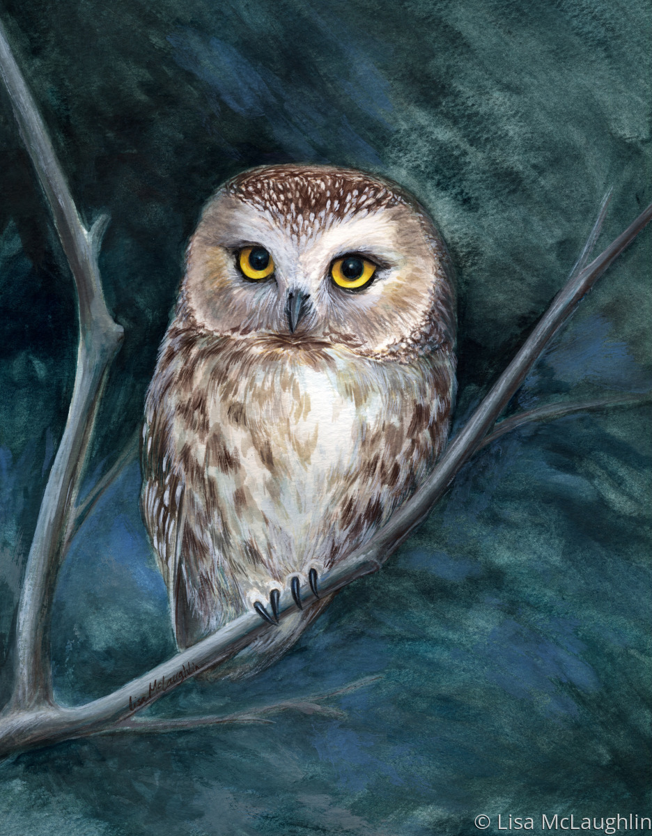Painting Quot Saw Whet Owl Quot Original Art By Lisa Mclaughlin