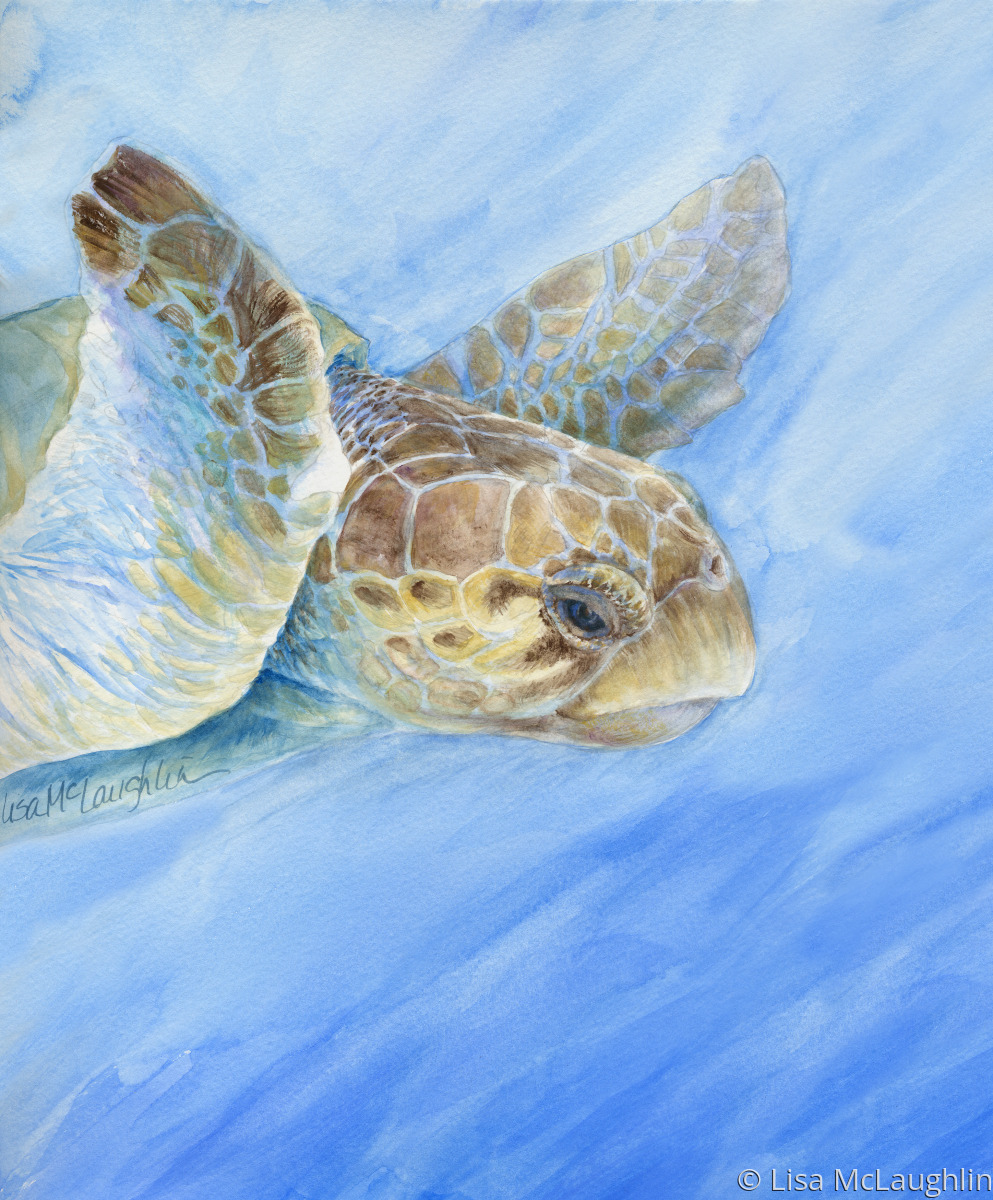 Painting Quot Wise Old Sea Turtle Quot Original Art By Lisa