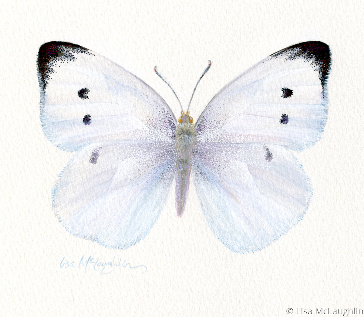 Painting Quot Cabbage White Butterfly Quot Original Art By Lisa