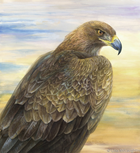 Desert Golden Eagle by Lisa McLaughlin