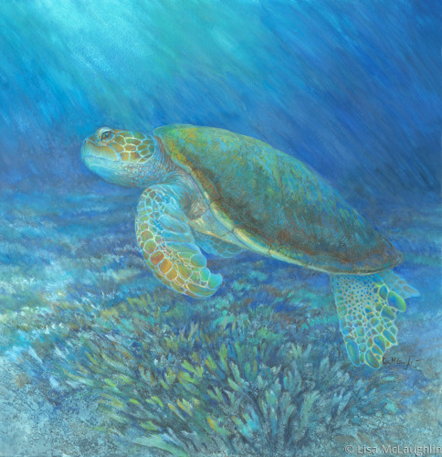 Sea Turtle by Lisa McLaughlin