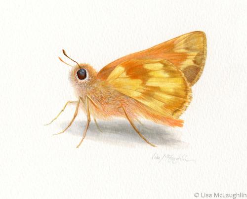 Golden Skipper Butterfly