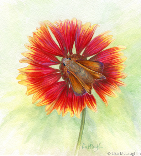 Fiery Skipper Butterfly rests