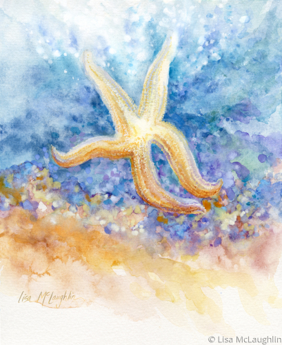 starfish by Lisa McLaughlin