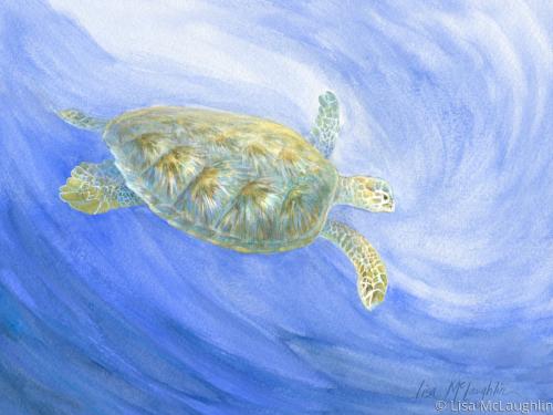 sea turtle submerging