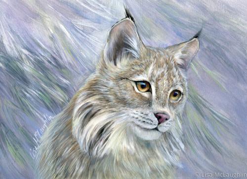 Young Lynx kitten