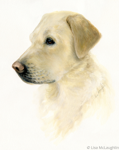 Yellow Lab study