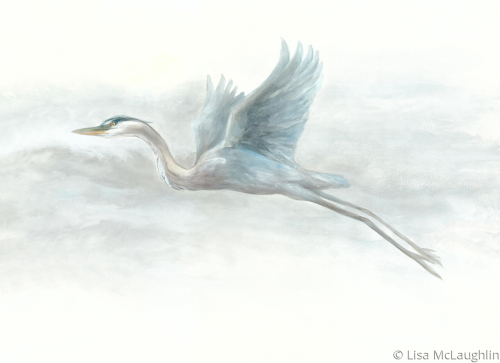 Great Blue flying
