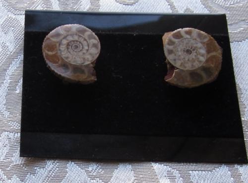 a8er ammonite earring