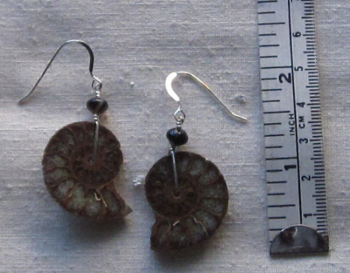 A17ER ammonite earrings (large view)
