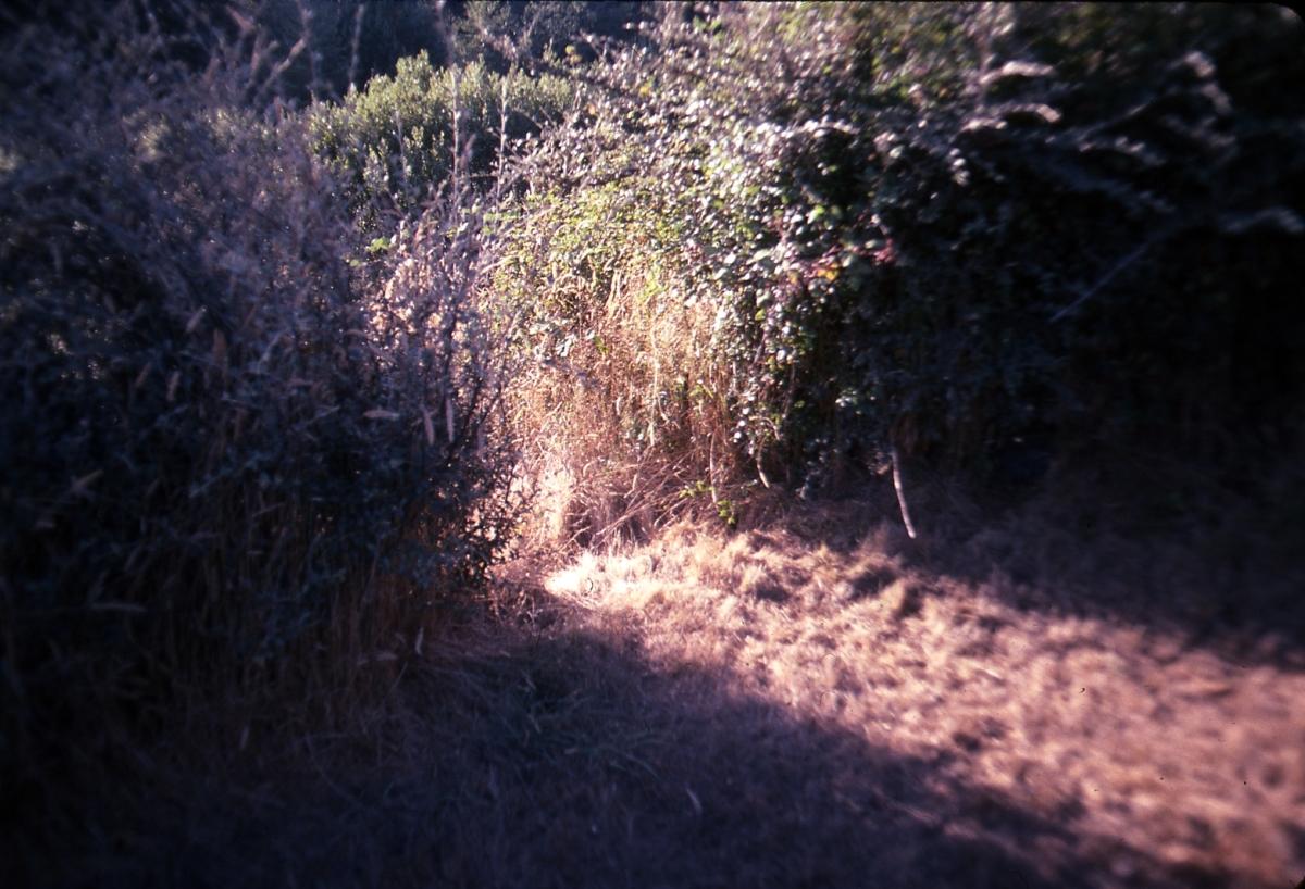 Grandpa's Deer Path, Humboldt County (large view)