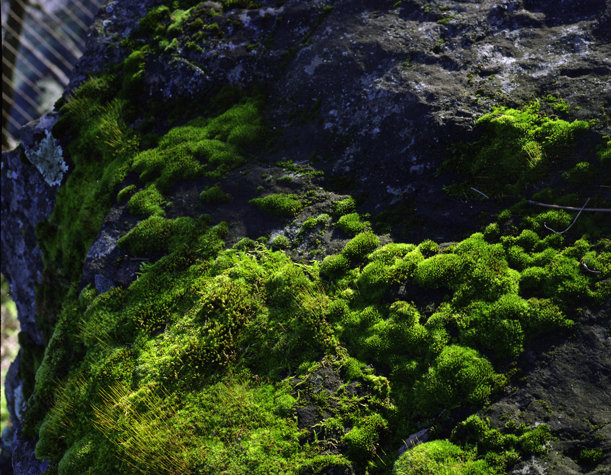 Moss Rock (large view)