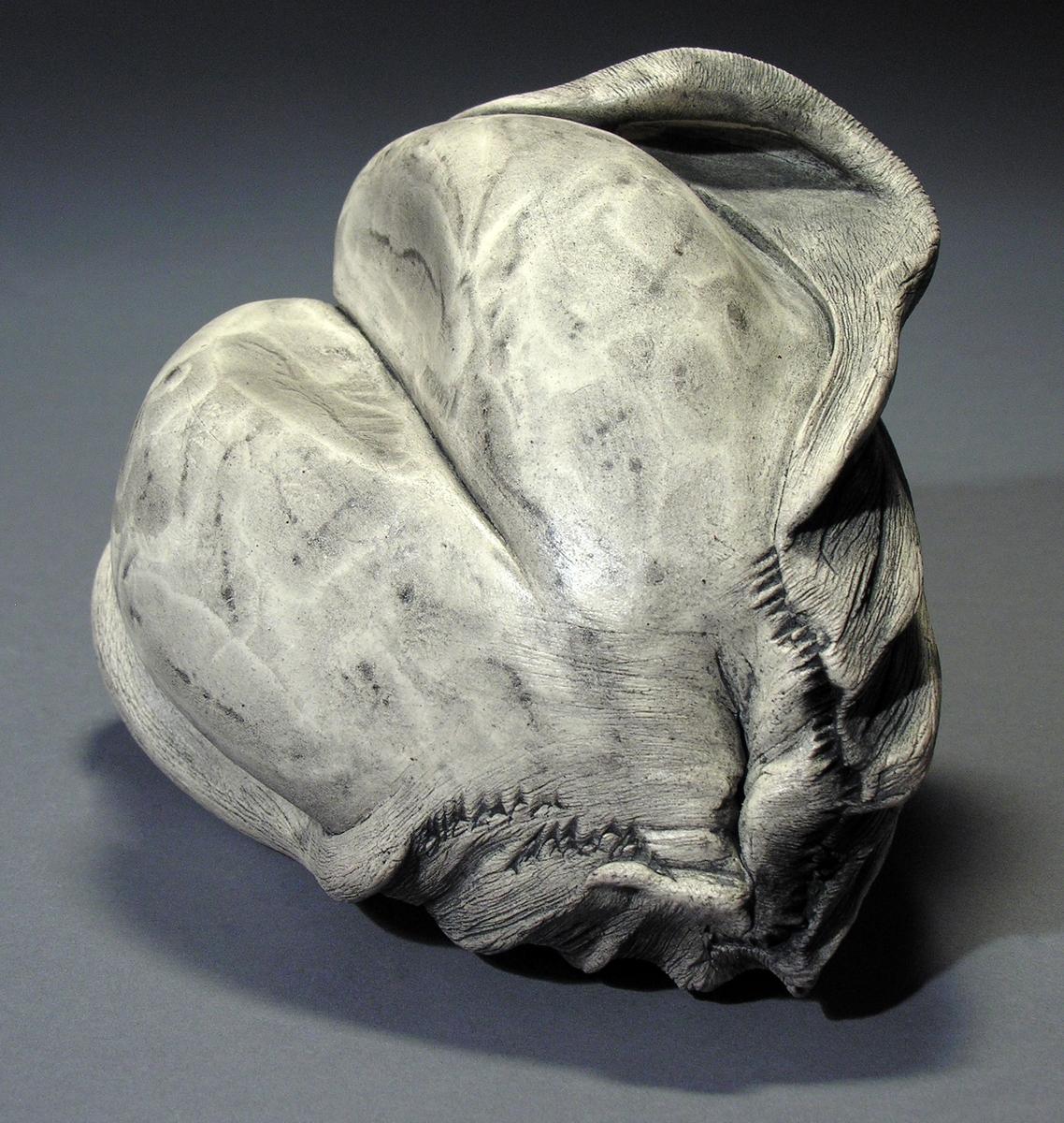 Protista (large view)