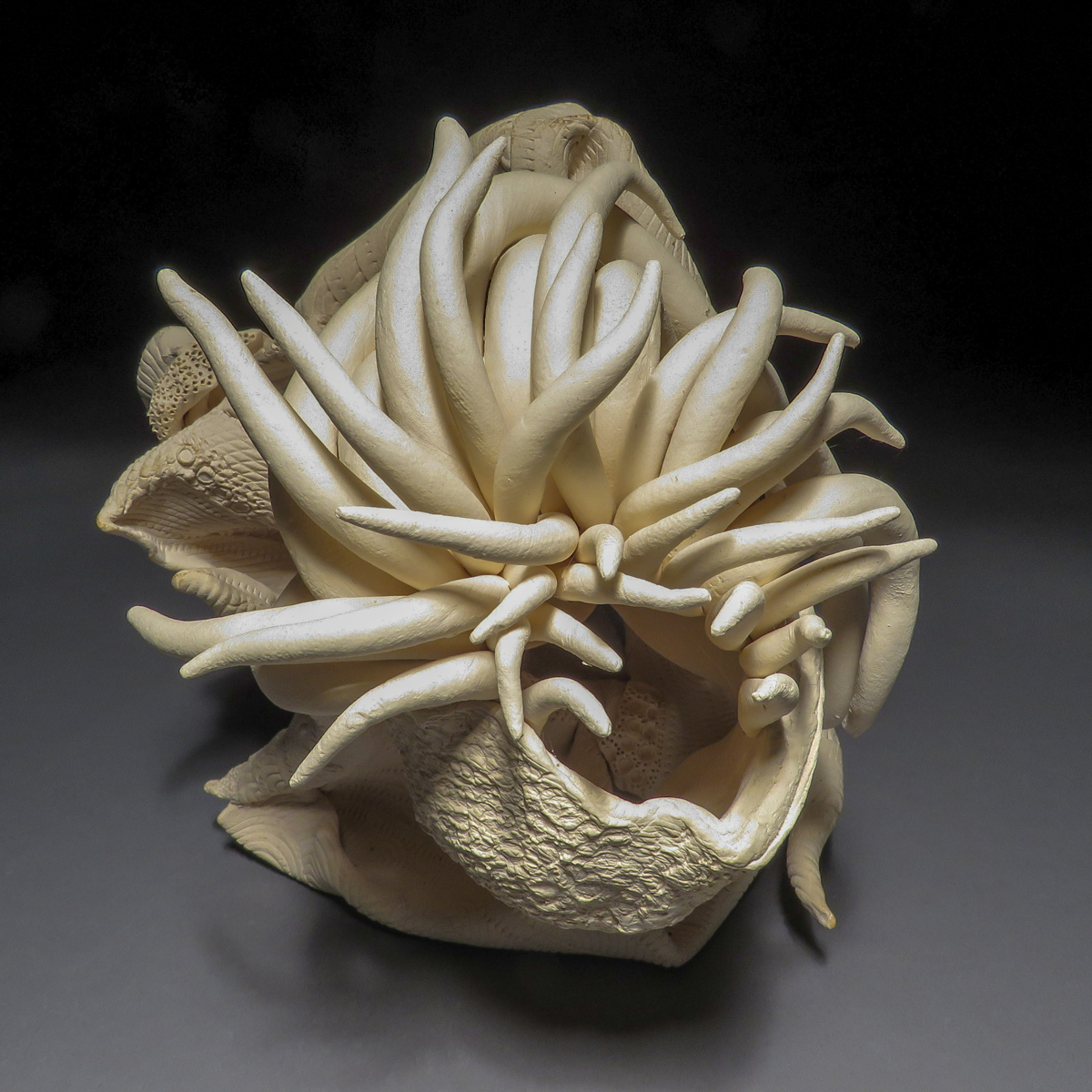 Medusa (large view)