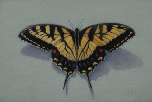 Tiger Swallowtail Butterfly (large view)