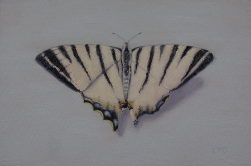 Zebra Butterfly in Italy (large view)