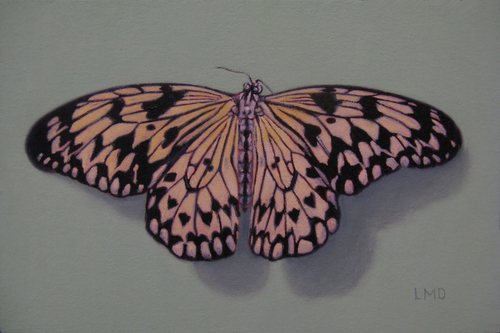 Rice Paper Butterfly (large view)