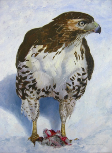 Hawk Eye by Louise Morin Dichard