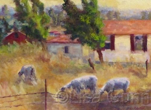 Petaluma Sheep