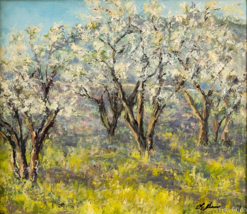 Moraga Pear Orchard
