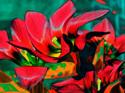 Tulips II (thumbnail)