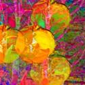 Gelbe Tulpen (thumbnail)