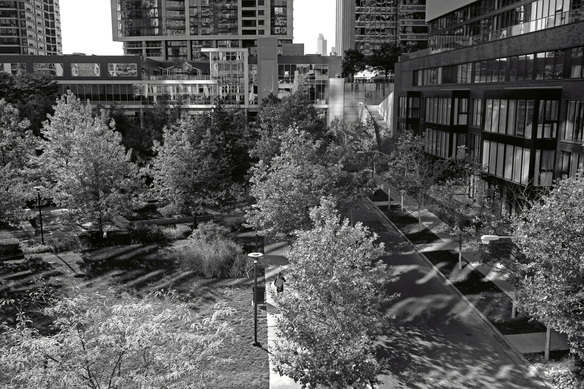 City Trees, Chicago, Illinois, 2015 (large view)