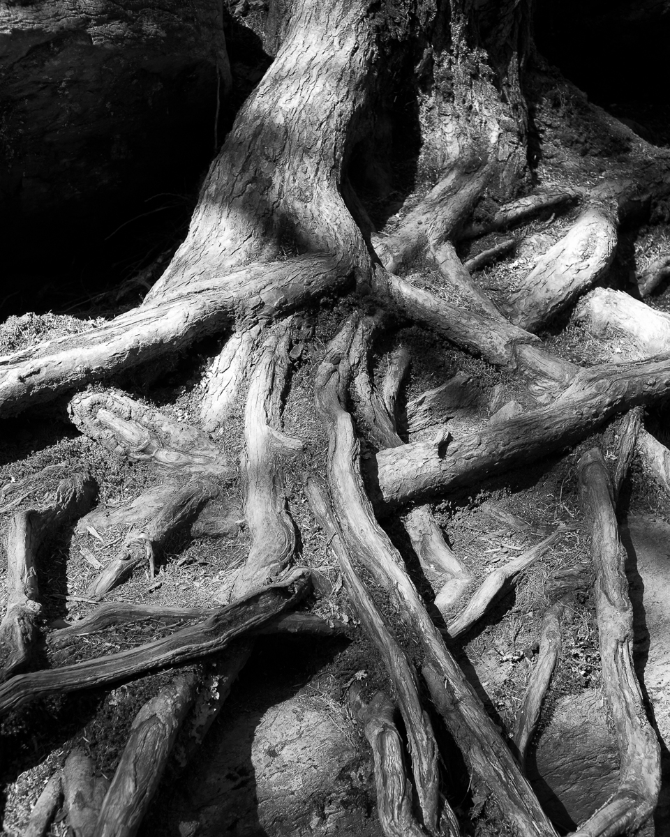 Roots - 02 (large view)