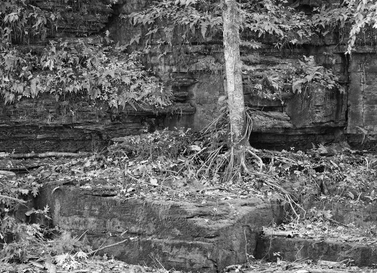 Roots - 03 (large view)