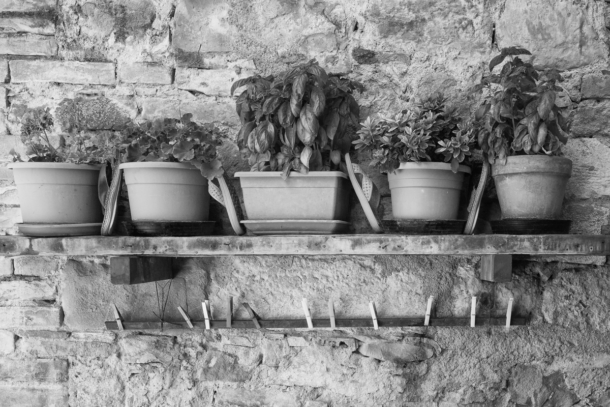 Potted Herbs, Tuscany-3240, 2012 (large view)