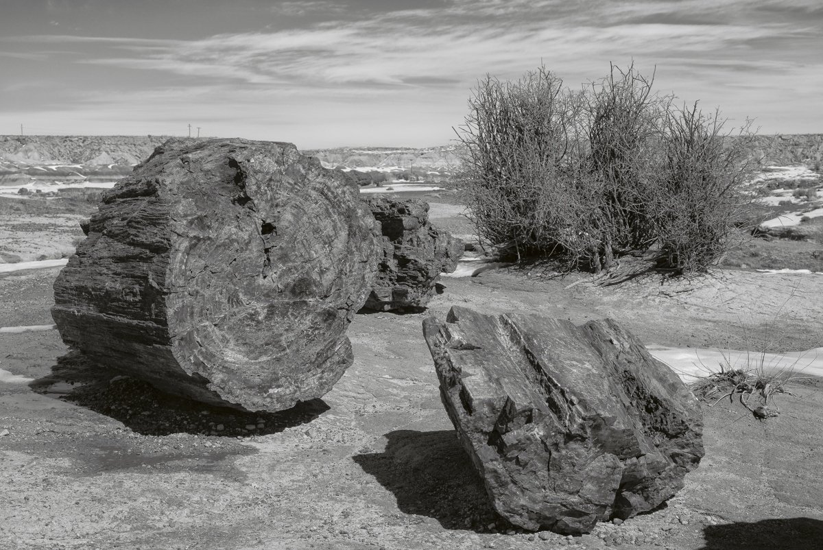 Giant Logs - 2154, Petrified National Forest, AZ (large view)