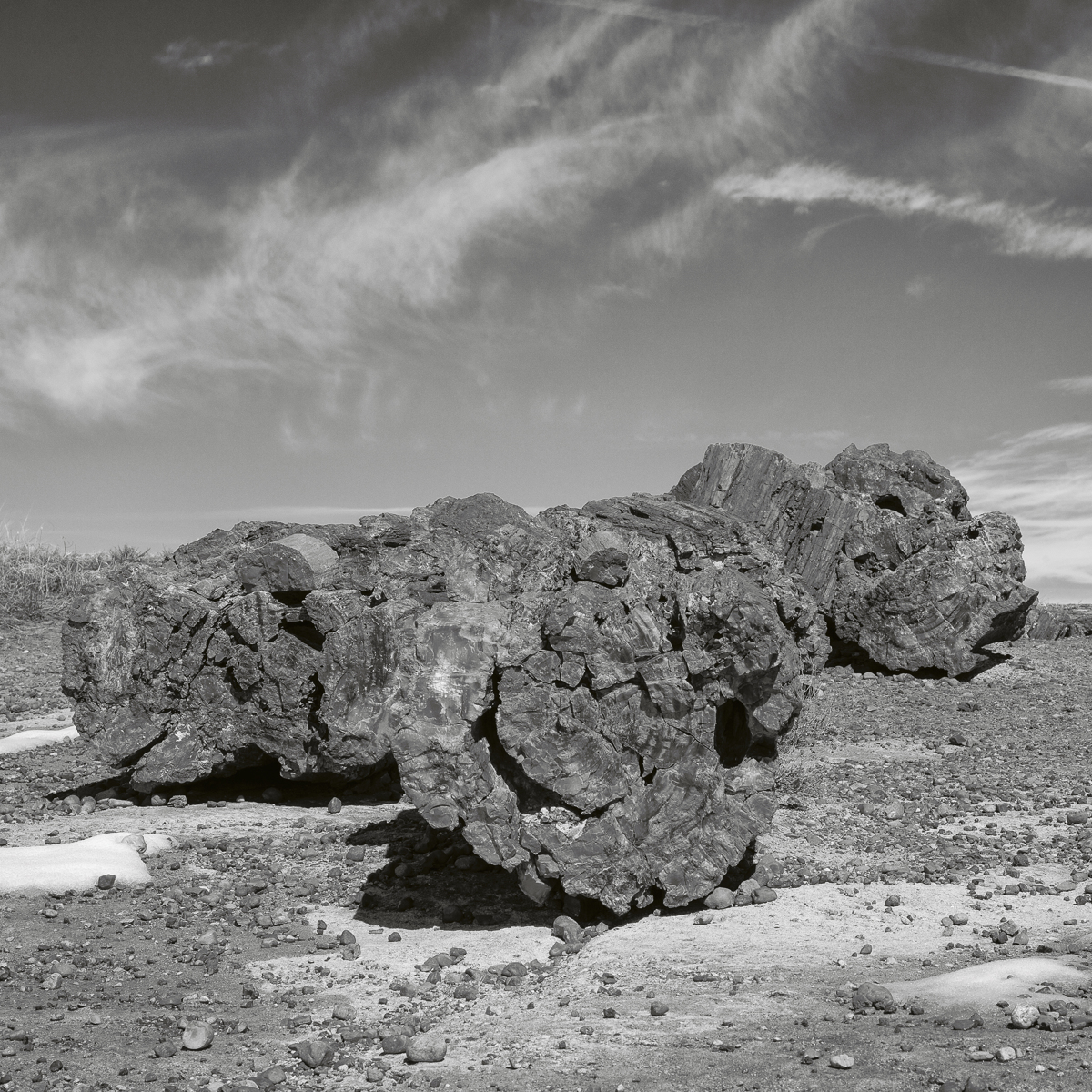 Giant Logs - 2139, Petrified National Forest, AZ (large view)