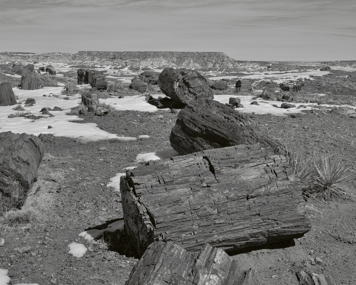 Long Logs - 2193, Petrified National Forest, AZ (large view)