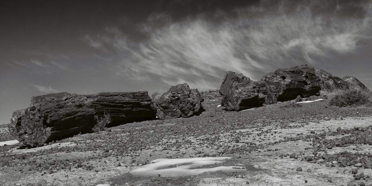 Giant Logs - 2133, Petrified Forest National Park, AZ (large view)