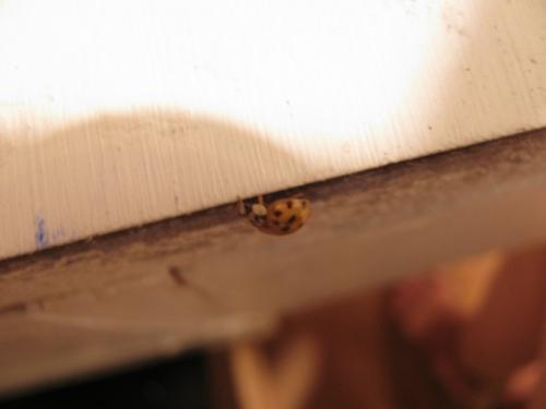Ladybug break  (large view)