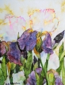 Iris (thumbnail)