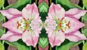 Printmaking--Giclee-Abstractwaterlily